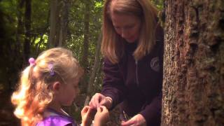 In Focus: Forest Kindergarten