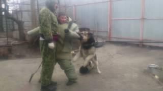 ЗКС. Попытка обмануть собаку с помощью рукава.