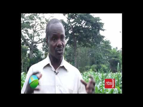 Agri Business: Busoga Farmers' Woes