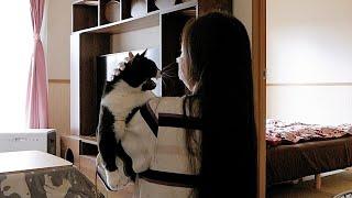 猫たちとしばしお別れのはずが...