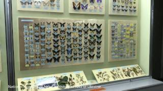 Butterflies - National museum of Natural History of NAS of Ukraine