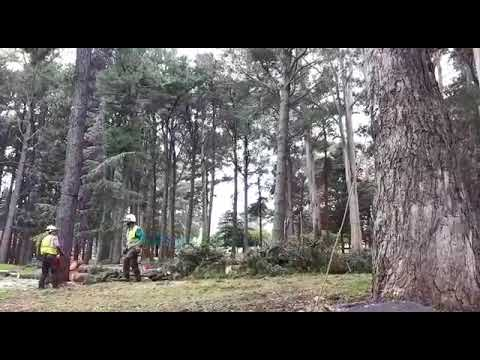 Arranca la tala en el parque de Covas