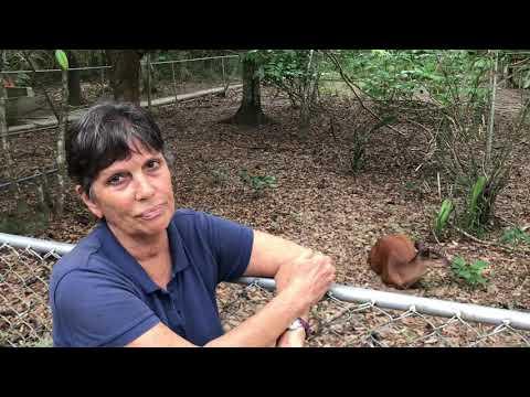 Videoblog: Animal Rescue Project Visit near Puerto Maldonado (by Chris Ketola, coordinator)