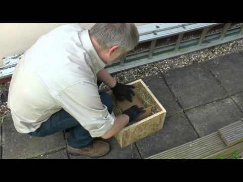 Wildlife Gadget Man - Blue Tit Chick Rescue 1 210515