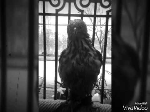 Falconry ưng ân