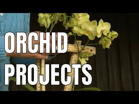 Growing Orchids: Container