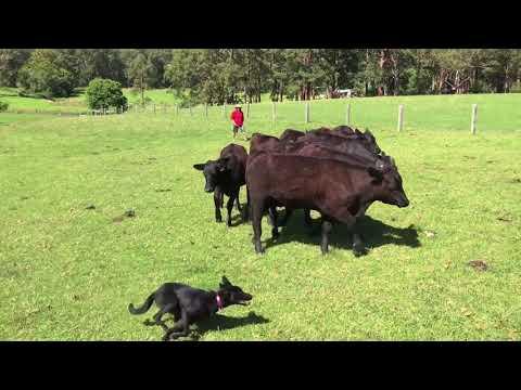 Harris Farms Ginny