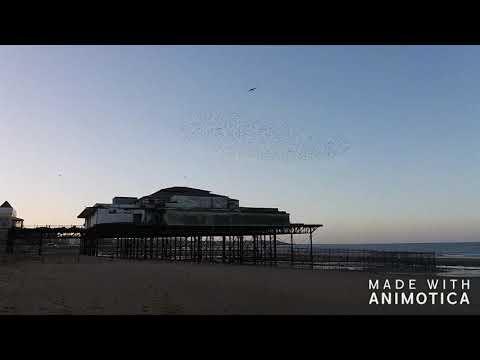 Starling Flocks amazing Murmurations over Colwyn Bay, North wales.