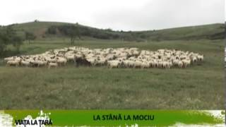 REPORTAJ VIDEO - La stana la Mociu