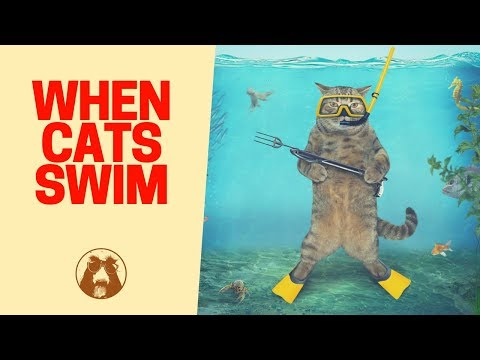 Swimming 🏊 Cats - Cute Cat 🐱 Videos