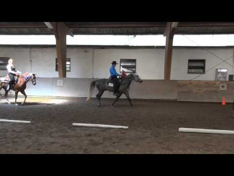 EMFTHA High Point Turnier - Missouri Foxtrotter 2013 - 3-Gait Performance