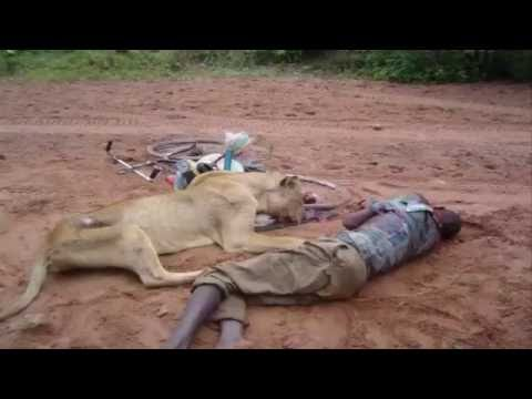 Wild Nature -The Big Five Dangerous Animals in Africa part2