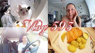 Beim Tierarzt l Lias & Jason - blutige Ohren l Food l Shake Kur? l Autolaber Vlog 593