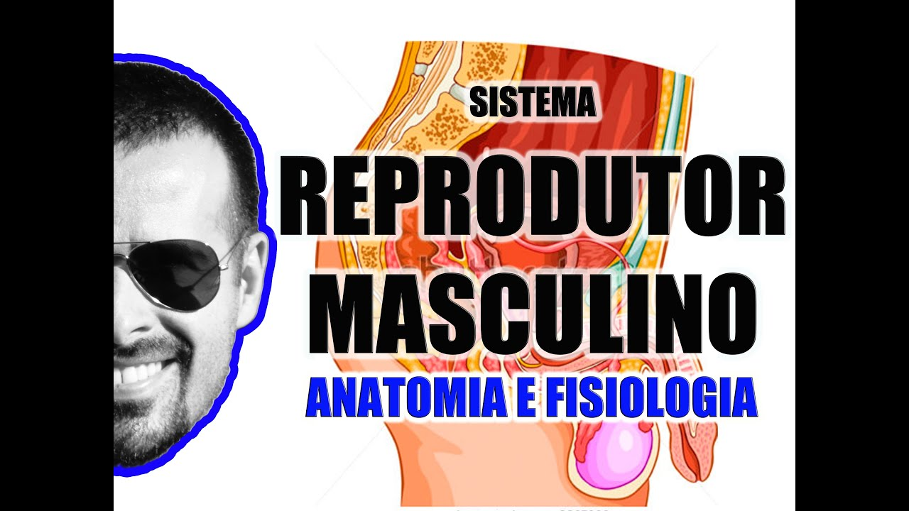 Sistema Reprodutor Masculino - Órgãos genitais masculinos - Anatomia ...
