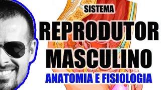 Vídeo Aula 058 - Sistema Reprodutor Masculino - Anatomia Humana - Órgãos genitais masculinos