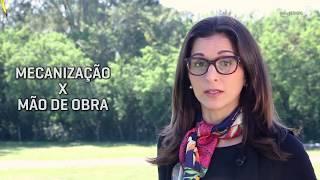 HF em Vídeo: Quanto custa produzir hortaliças no Brasil?