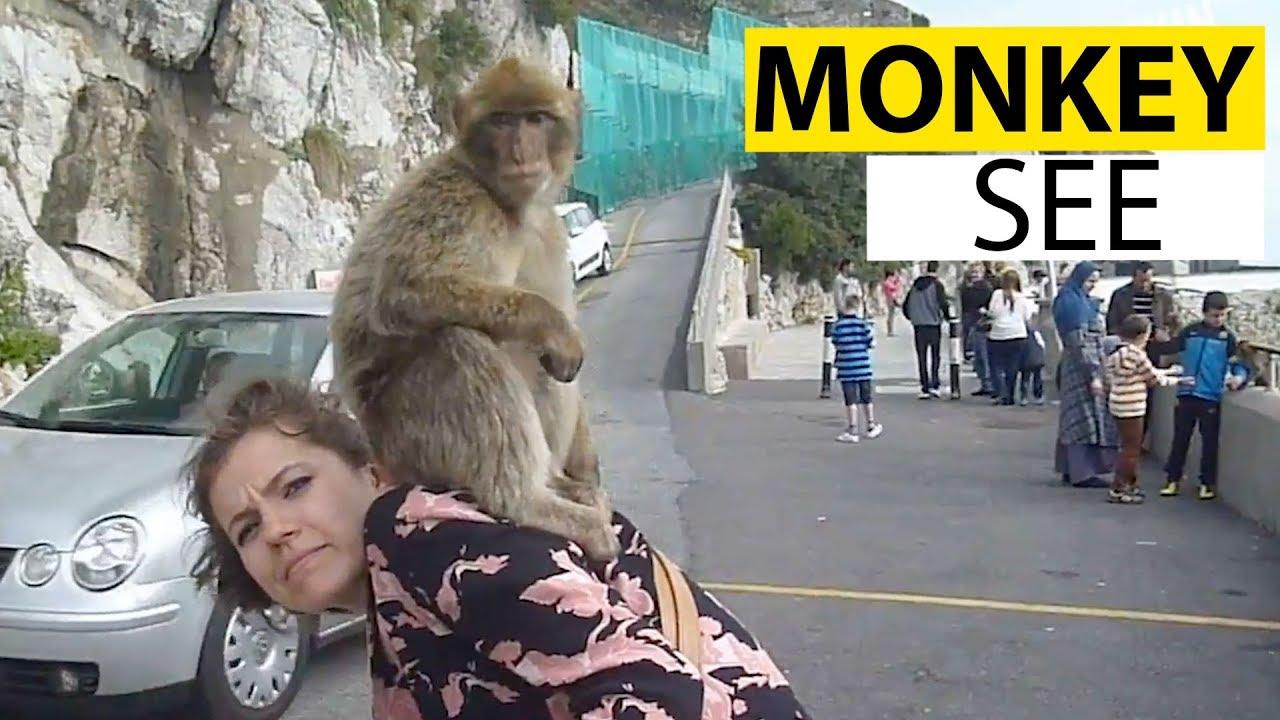 Monkeying Around | Funny Monkey Video Compilation