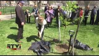 В Нью-Йорке посадили саженец дерева, выжившего на месте падения Башен Близнецов