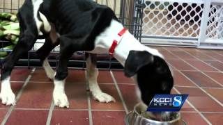 Puppy Left Alone In Kennel For Weeks Somehow Survives