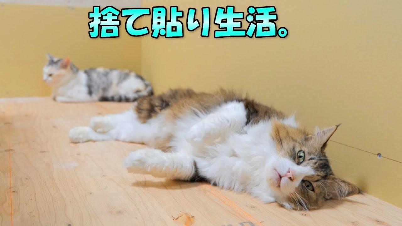 猫達の捨て貼り生活。続きの作業なかなか出来なくてごめんね‥