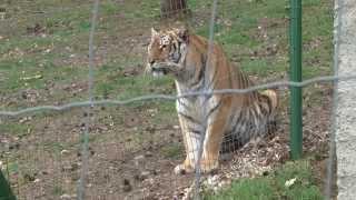 Le parc en Europe dédié à la faune des Sommets du Monde