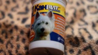 Витамины для собак • Косточка, радостин, рыбий жир, канвит