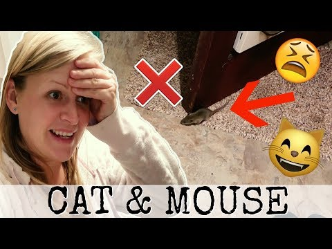 WE SAVED THE MOUSE FROM THE CATS MOUTH
