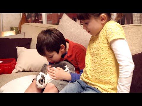 Topsy Ve Tim Türkçe - Tavşanımızın Gezisi - Sezon 02 Bölüm 12