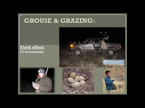 Effects of grazing on sage grouse and other shrub steppe birds (webinar)