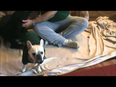 Dog Massage BLOOPER SESSION