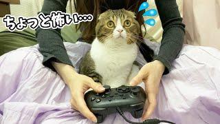 モンハンライズのモンスターにビビっちゃう猫が可愛すぎるwww🐈