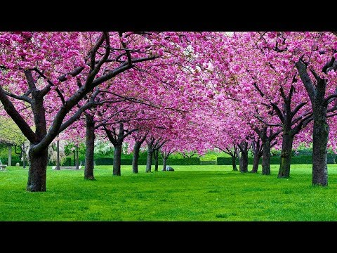 Relaxing Piano Music for Stress Relief. Soothing Music for meditation, music therapy