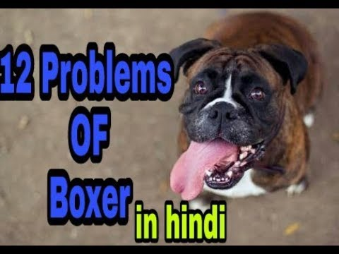 12 Problems OF Boxer in hindi || dob ||