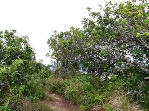 Mariners Ridge