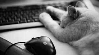 Теории по книгам Коты Воители #2 /Оля CaT