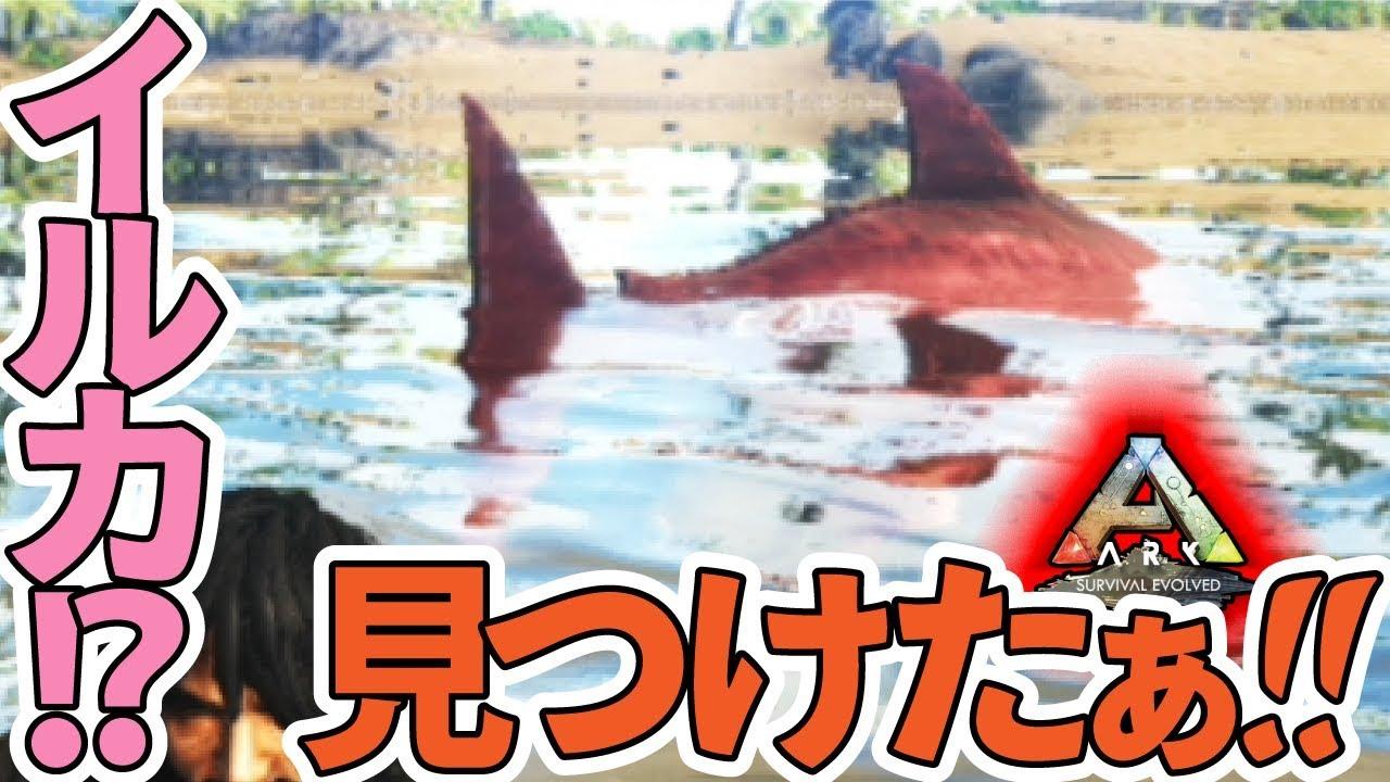 イルカ サウルス イク チオ