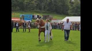 Concours National des Chevaux Comtois à Maîche