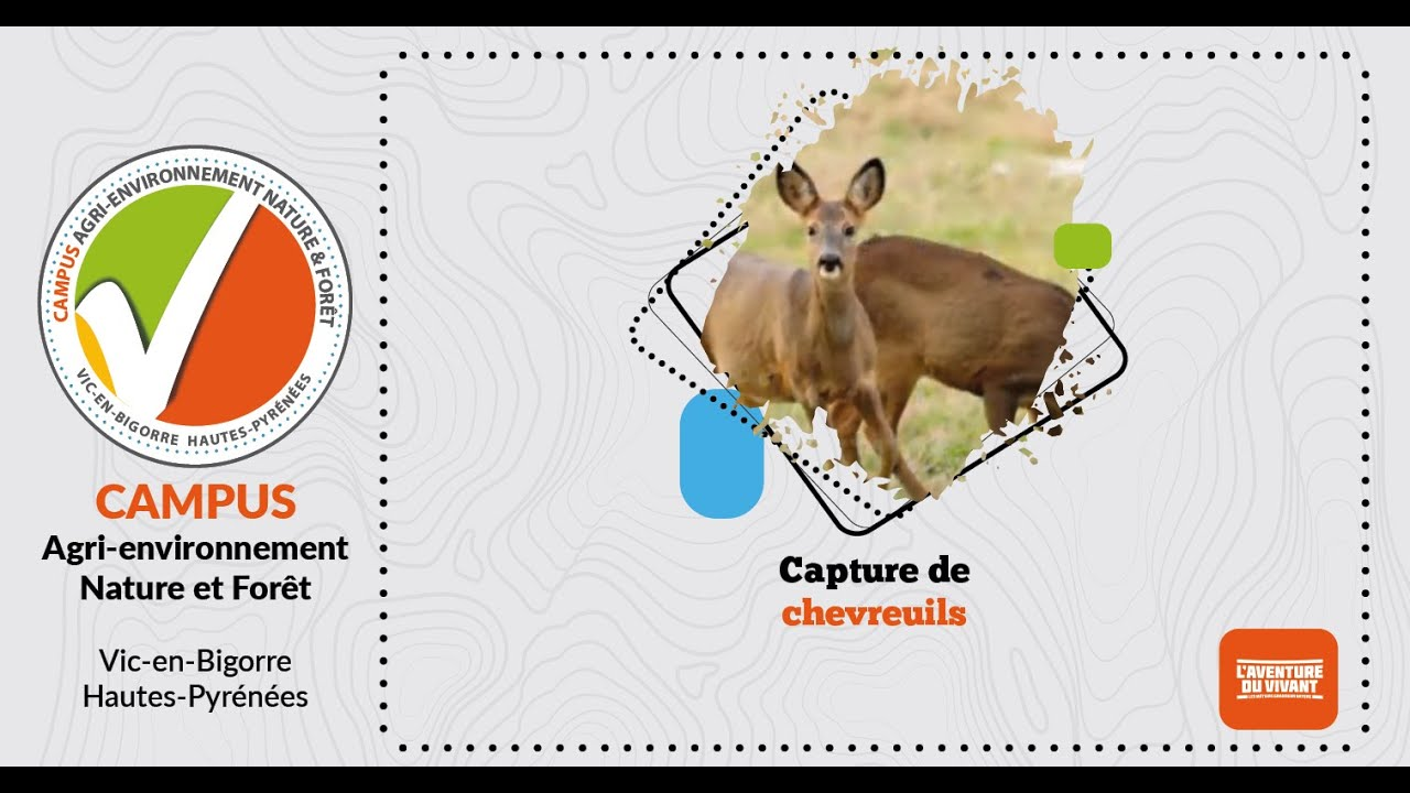 Capture chevreuils