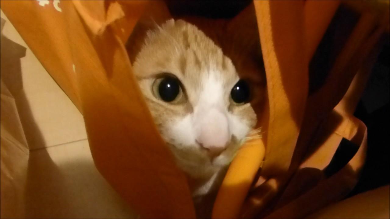 いつの間に~!?笑  Roux-In the closet