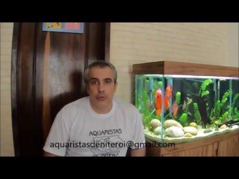 Grupo Aquaristas de Niterói - Episódio II: Patê para Acará Disco - Alexandre Grego