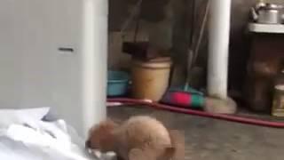 Собака vs Кошка (sex😳)