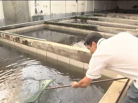 Governo quer investir em agricultores familiares para for Piscicultura en tanques plasticos