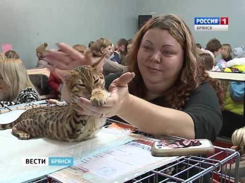 Международная выставка кошек в Брянске