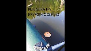 Рыбалка на кружки Ловля щуки на живца осенью