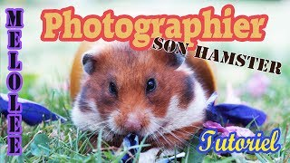 [Tuto] Prendre son hamster en photo