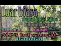 Mikat Burung Di Kebun Karet Hasil Melimpah Part   Mp3 - Mp4 Download