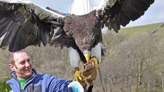 All About American Eagles