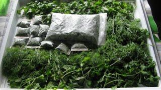 Как заморозить зелень на зиму. Простая заморозка зелени на зиму