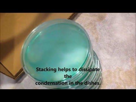 Making Potato Dextrose Agar Petri Dishes for LEGAL GOURMET Mushroom Cultivation