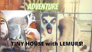 Tiny house with Lemurs